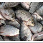 Как готовить рыбу. Секреты приготовления